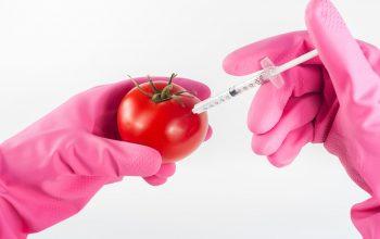 ogm pesticidas canada CETA
