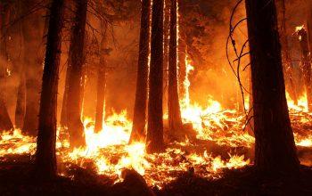 Fogo de Floresta Amazónia - Pantanal