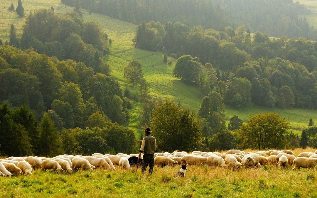 O acordo UE-Mercosul: impactos para a agricultura europeia