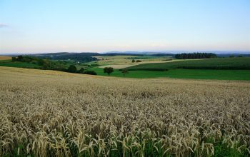 agricultura europeia